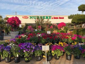 Ảnh của Phuong's Nursery & Home Decor in Garland, TX
